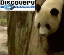 Feeding Time<BR />Discovery Channel<BR /><BR />Dubbing Mix
